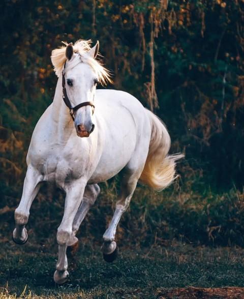 White Horse CB Editing Full Hd Background