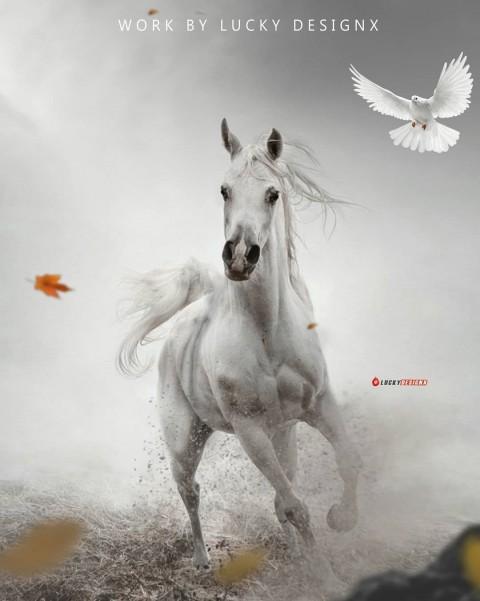 White Horse Photo Editing Background