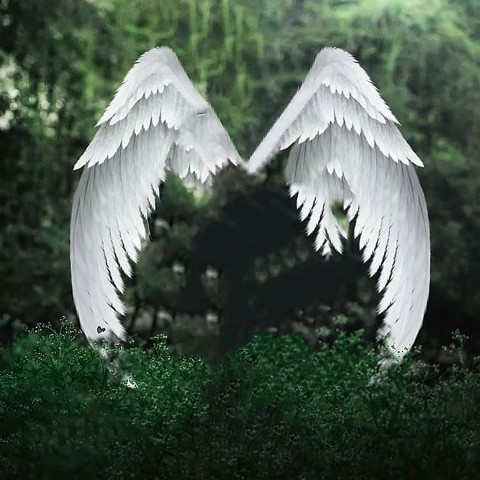 Wings Snapseed Background Full Hd