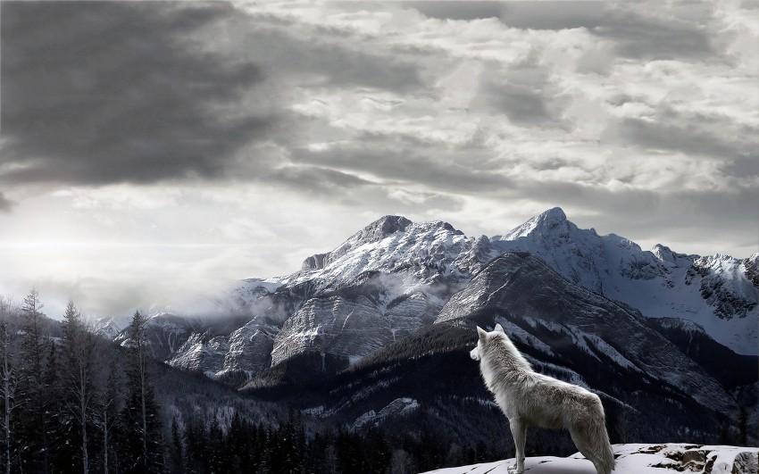 Wolf Mounatin Background Full HD Wallpaper Download