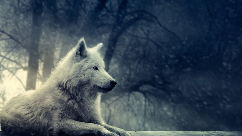 Wolf Sitting In Forest Background Full HD Wallpaper Download