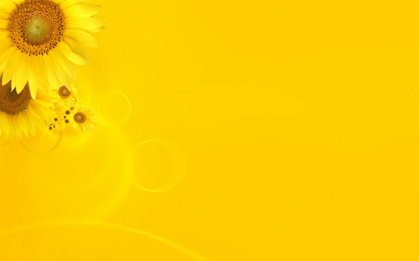 Yellow PowerPoint Background With Sunflowers